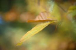 Lensbaby omni color expansion pack-17